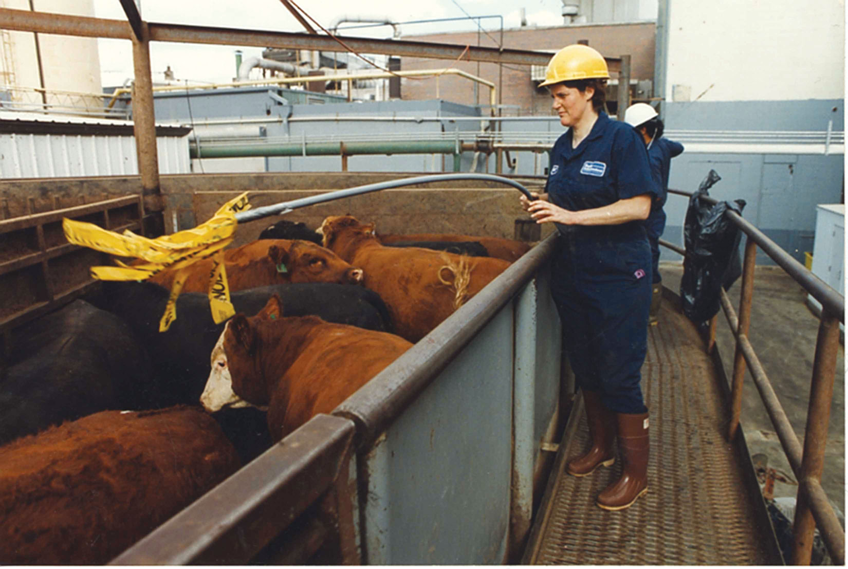 Livestock- Cattle: Economic Characters